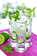 Photo cocktail Mojito